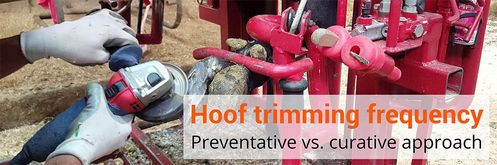 Hoof Trimming Frequency