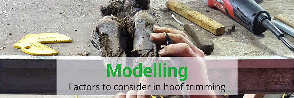 Modelling: factors to consider in hoof trimming