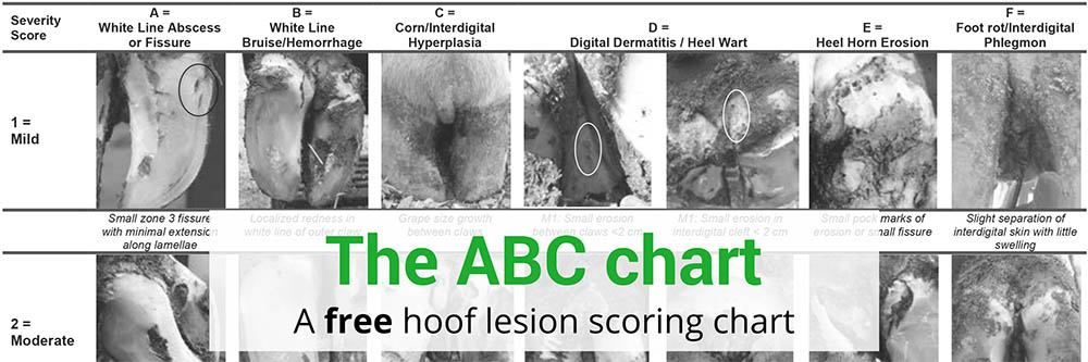 The ABC Chart: your guide to the dairy hoof diseases galaxy