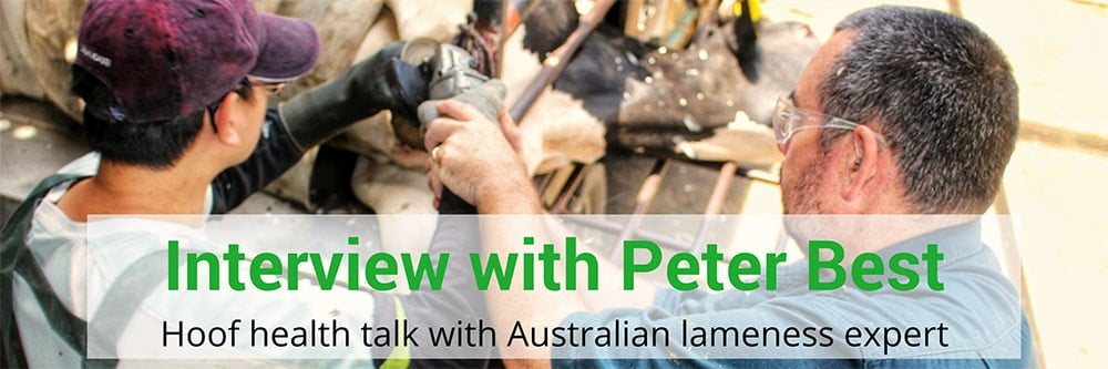 Talking with Australian lameness expert Peter Best